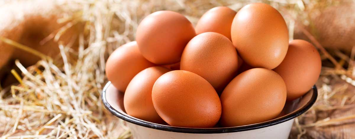 Meat, fish and eggs on the Candida diet: Chicken, turkey, salmon, sardines, herring, and eggs
